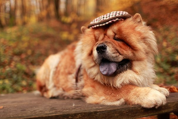 http://beautypic.ucoz.com/1/autumn-dog-1.jpg