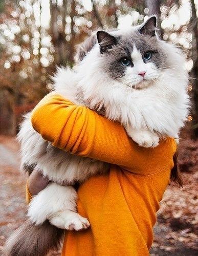 Породистые красивые кошки 30 декабря