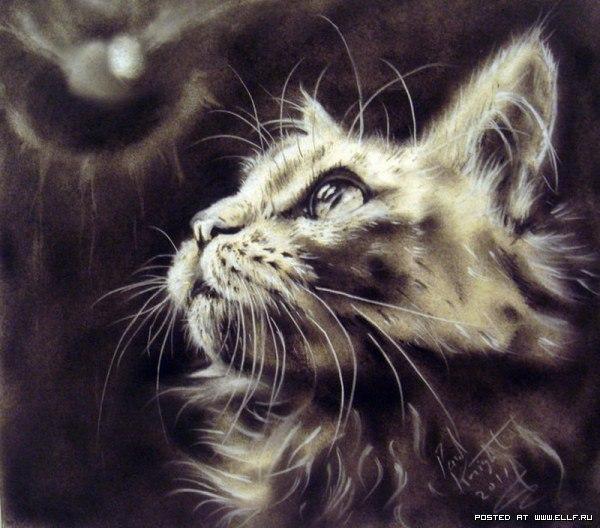 Кот вглядывается в ночь в поиске двери
