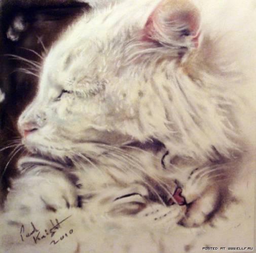 Мордашки кошек нарисованные